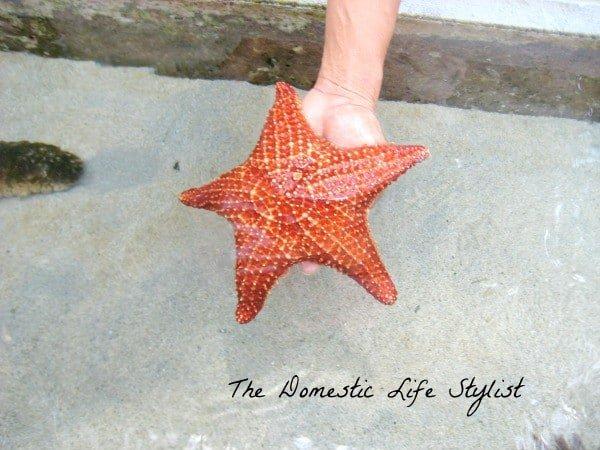 Starfish at Coral World, St. Thomas, VI