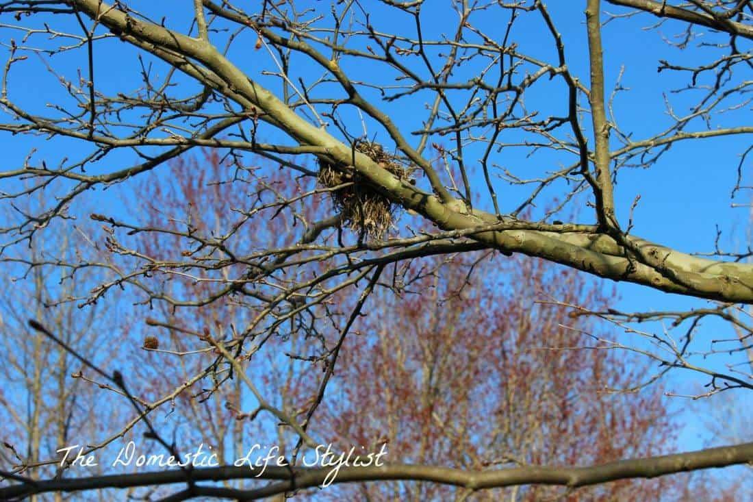 Bird's nest in tree