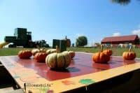 Tic tac toes pumpkins