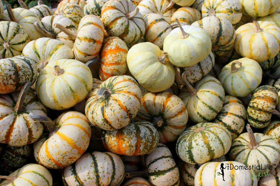 small striped pumpkins