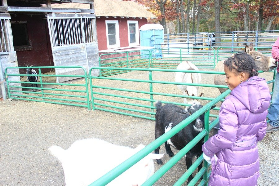 petting-zoo-at-pocono-manor-in-the-poconos