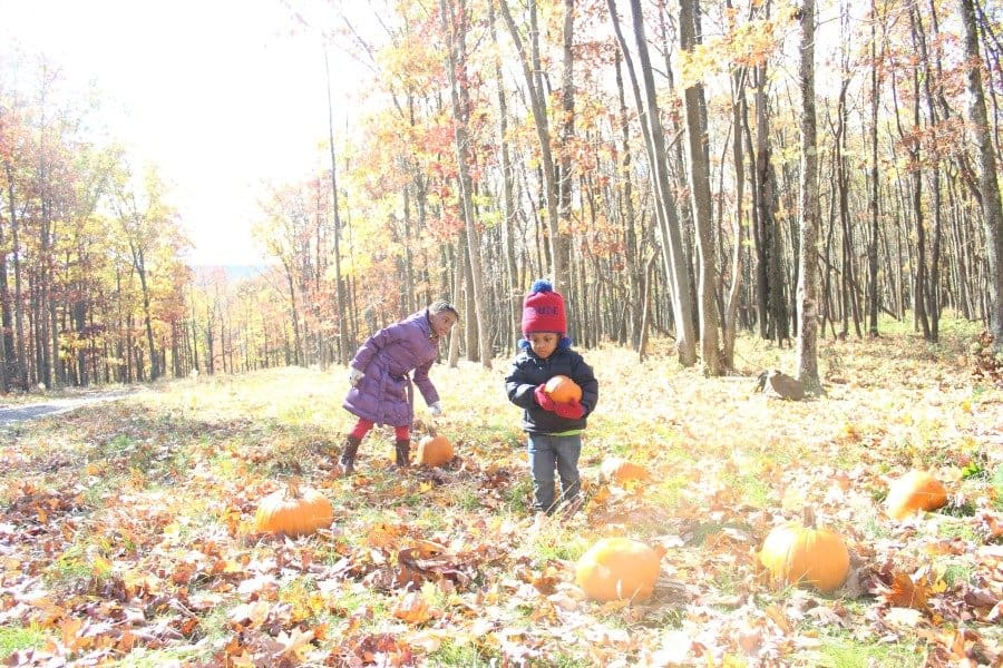 pumpkin-patch-at-inn-at-pocono-manor-in-poconos