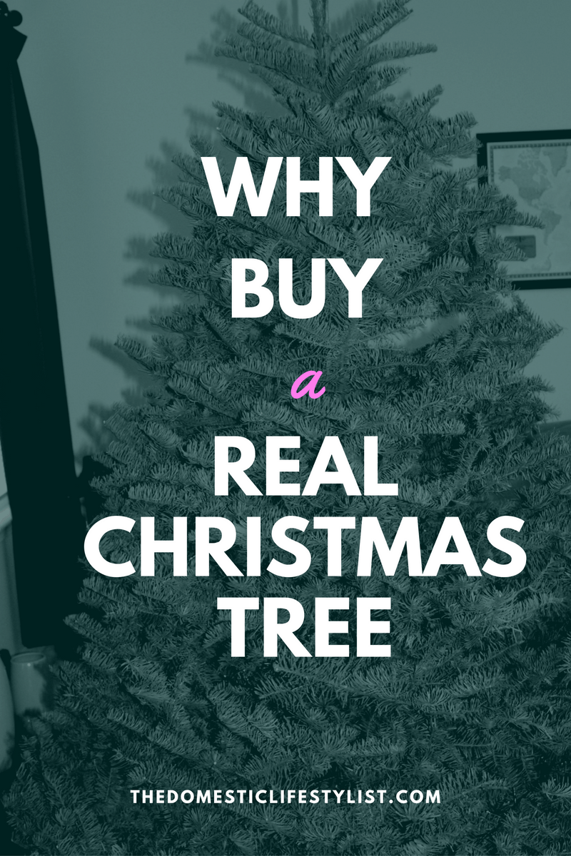 why buy a real Christmas tree and how to take care of it