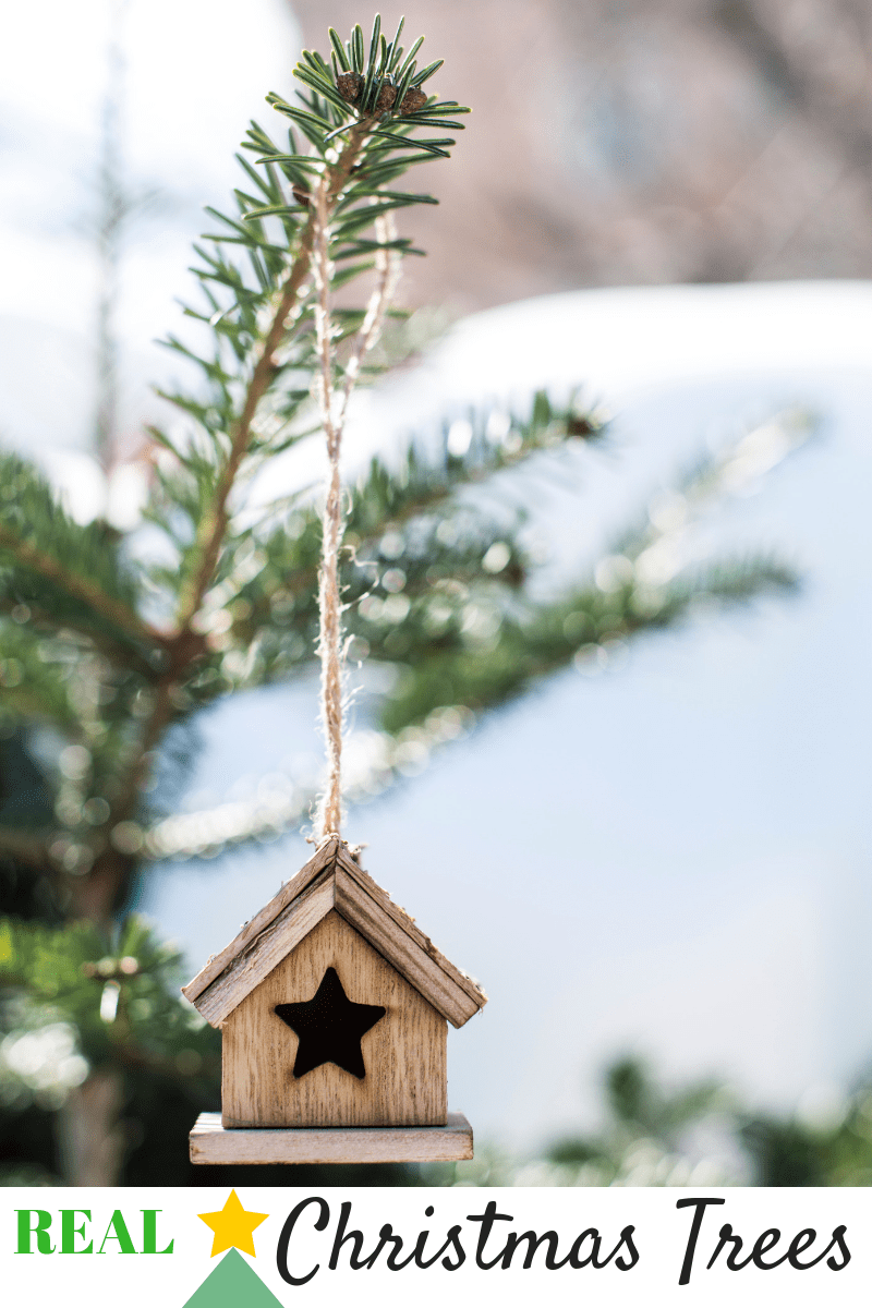 Reasons To Buy A Real Christmas Tree The Domestic Life Stylist